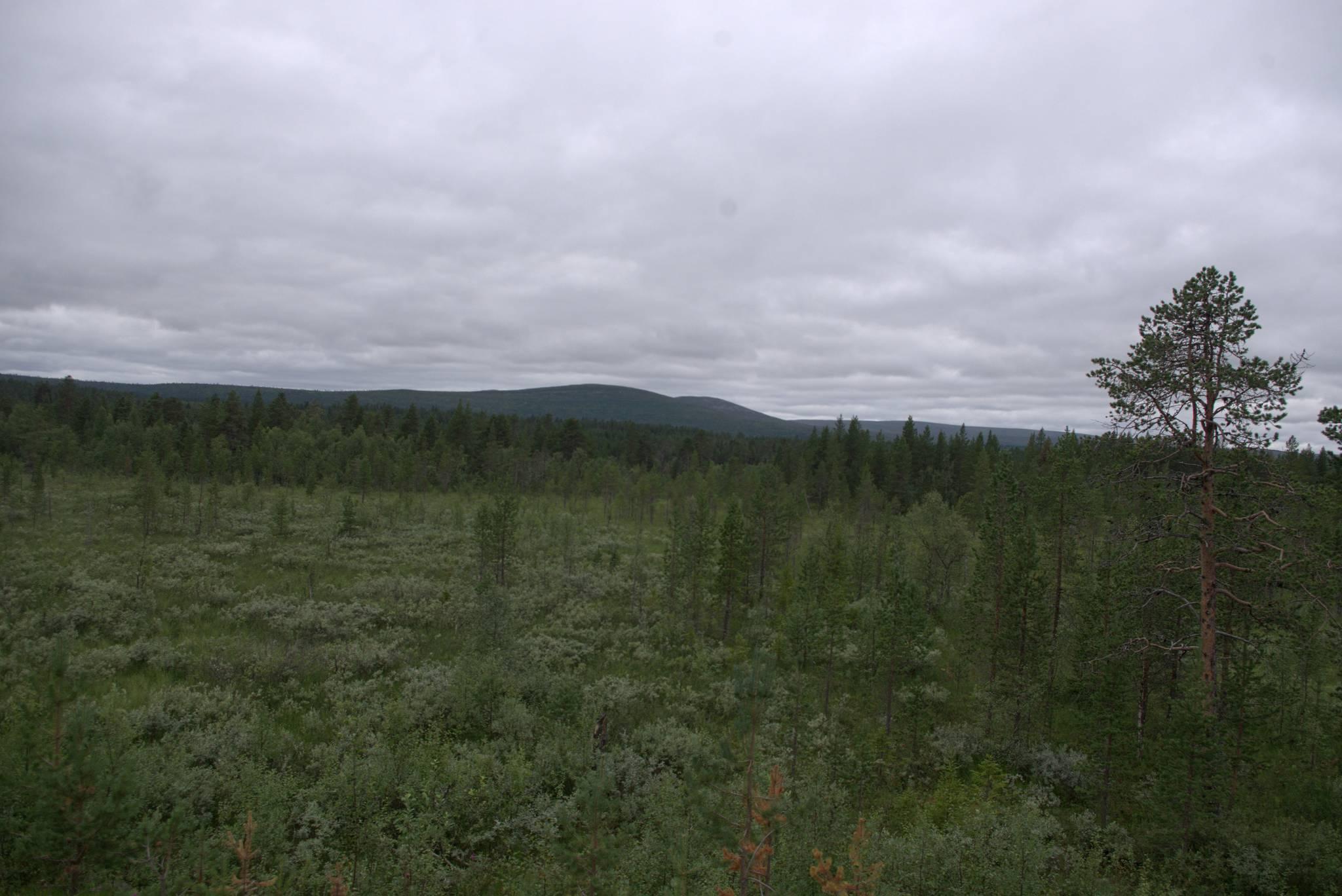 w oddali pagórki parku narodowego Pallas-Yllas oraz wysyp komarów.