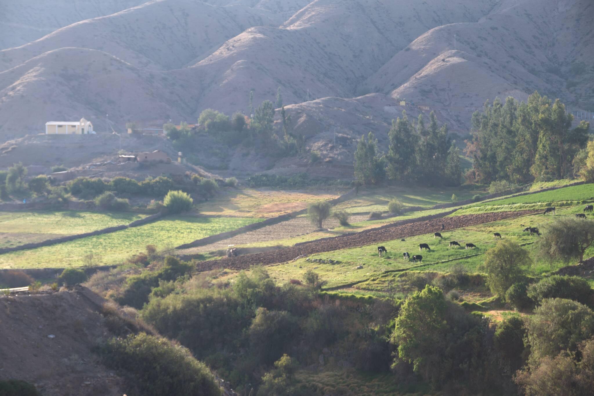 Dzięki systemom irygacyjnym istnieje rolnictwo