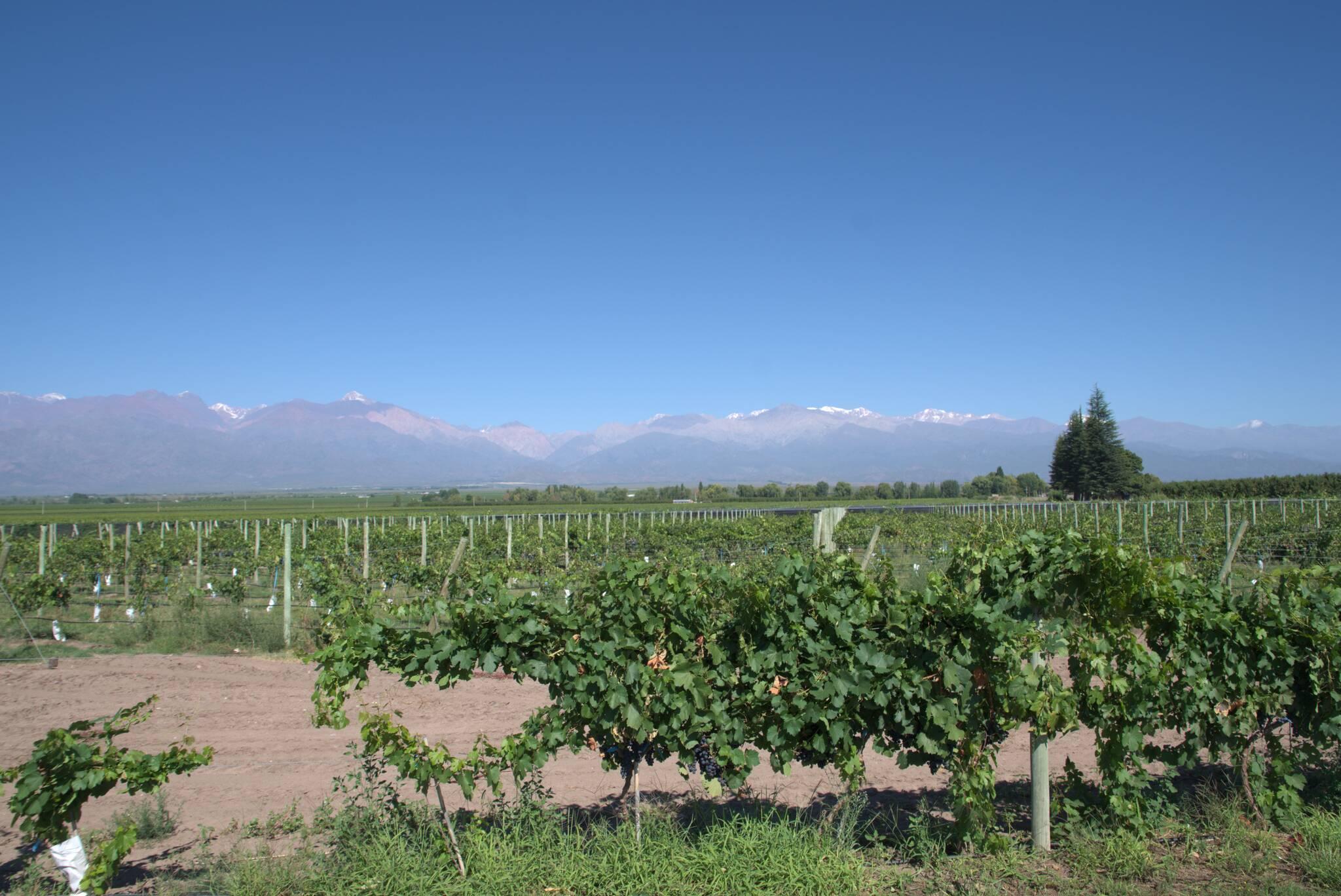 Winiarnie na południe od Mendozy