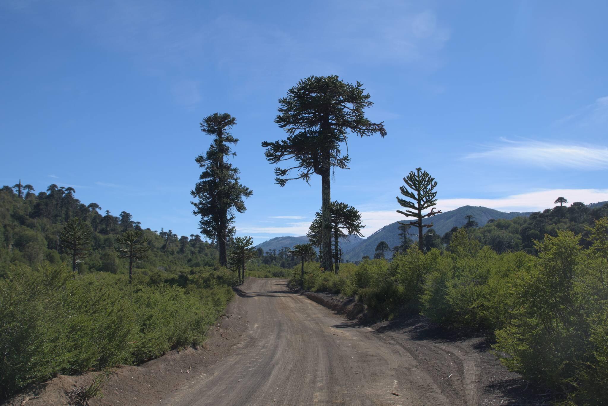 Bardzo ciekawa trasa po tej niespalonej części lasu