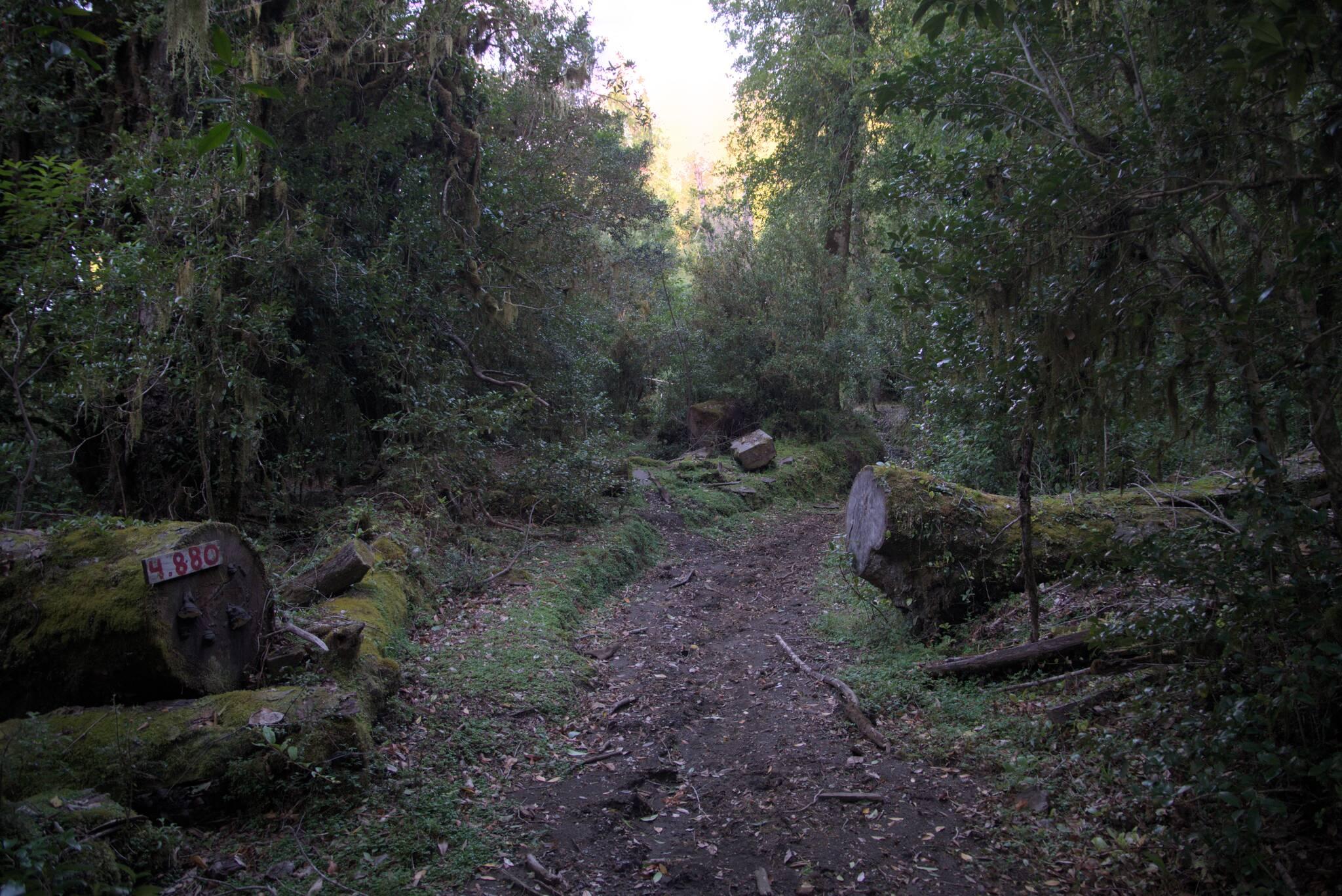 Cała droga jest osłupkowana i prędzej, czy później zostanie zrobiona